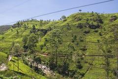 Sri Lanka Fotografia Royalty Free