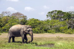Sri Lanka Royaltyfri Fotografi
