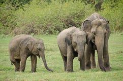 Sri Lanka Стоковые Изображения RF