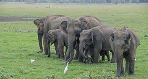 Sri Lanka Стоковое Фото