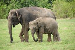 Sri Lanka Стоковая Фотография RF