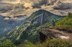 Sri Lanka ajardina o Elle pequeno máximo de Adam Imagem de Stock