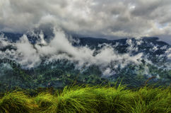 Sri Lanka ajardina o fundo da natureza Imagem de Stock Royalty Free