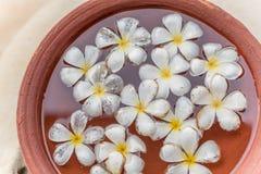 Sri Lanka: Araliya flower, temple tree in the water royalty free stock photography