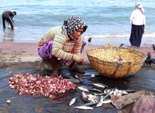 Sri Lanka, 19.03.2016: Asian woman is cleaning and preparing small fish stock photography