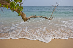 Sri Lanka beach Royalty Free Stock Image