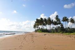 Sri-Lanka beach. Relax on the beach in Sri Lanka Royalty Free Stock Photography