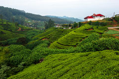 Sri Lanka. Beautiful highland tea plantations in Sri Lanka Royalty Free Stock Image