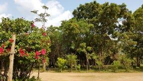 Sri Lanka brengt Flowergarden onder stock afbeeldingen
