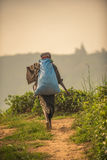 Sri Lanka : collecteur de thé avec un sac Images libres de droits