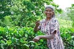 SRI LANKA, DECEMBER 8, 2011. Stock Photos