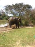 Sri Lanka djur Arkivbilder