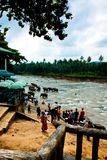 Sri lanka elephant festival. People came to visit this site to watch elephant during elephant festival Royalty Free Stock Photos