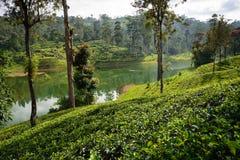 Sri Lanka et x27 ; domaines de thé de s image stock