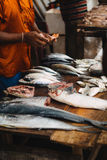 Sri Lanka fish market. A fish monger counts earnings from a sale at the fish market in Negombo, Sri Lanka Royalty Free Stock Image
