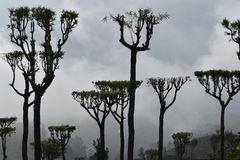 Sri Lanka Beauty at upcountry royalty free stock images