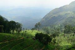 Sri Lanka green tea landscape Royalty Free Stock Photography