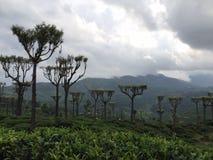 Sri Lanka hermosa Imagenes de archivo