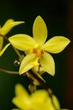 Sri Lanka. Koninklijke Botanische Tuinen. Stock Fotografie