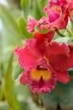 Sri Lanka. Koninklijke Botanische Tuinen Royalty-vrije Stock Foto