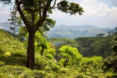 Sri Lanka landscapes Stock Photography