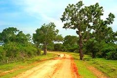 Sri Lanka-Landstraße Stockfoto