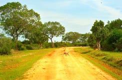 Sri Lanka monkey Stock Images