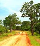 Sri Lanka national park Royalty Free Stock Image