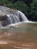 Sri lanka natural photo in haloya oya royalty free stock images