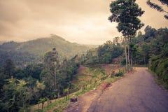 Sri Lanka nature Royalty Free Stock Photography