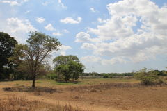 Sri lanka nature. Nature in sri lanka and dryness of some areas but bright and beautiful as people in their. hambantota sun light clouds trees with some of them Stock Image