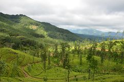 Nature and mountain Tea State in Srilanka royalty free stock image