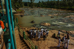 Sri Lanka, November 2011. Pinnawala Elephant Orphanag. Stock Photography