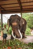 Sri Lanka, novembre 2011. Éléphant Orphanag de Pinnawala. Photos libres de droits