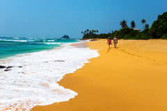 Sri Lanka. Ocean coast of Sri Lanka in the tropics Royalty Free Stock Photo
