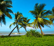 Sri Lanka. Ocean coast of Sri Lanka in the tropics Royalty Free Stock Photography