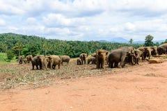 Sri Lanka. Olifantsheiligdom Stock Foto's
