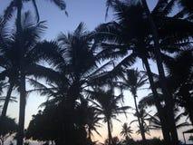 Sri Lanka Palms Royalty Free Stock Photo