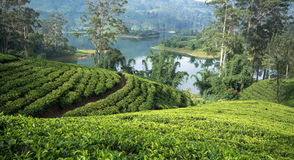 Sri Lanka's Tea estates. Sri Lanka's Hill Country and Tea estates Stock Photography