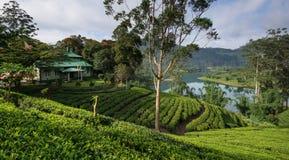 Sri Lanka's Tea estates. Sri Lanka's Hill Country and Tea estates Royalty Free Stock Photo