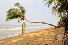 Sandy beach, palm trees over water, lopsided fence, waves. Sri Lanka. Sandy beach, palm trees over water, lopsided fence, waves Stock Images