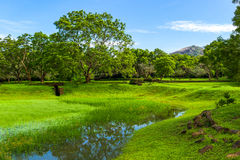 Sri Lanka. Sigirija, meadows,and verdant moss at the entrance of the Lion Rock archaeological site Royalty Free Stock Images