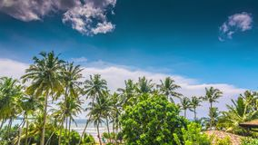 Sri Lanka sunny beach with palms
