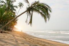 Beach, palm trees over the water. Sri Lanka. Sunny day. Sandy beach, palm trees over the water Royalty Free Stock Photo
