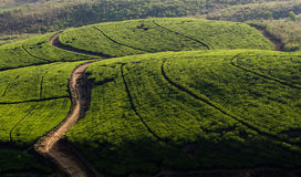 Sri Lanka, Tea plantation. Tea estate in the hill sides of Sri Lanka. Tea is one of the main industries which bring revenue to the countries economy Stock Photography