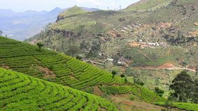 Sri Lanka-Teegartenberge in nuwara eliya stock video footage
