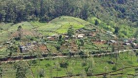 Sri Lanka-Teegartenberge in nuwara eliya stock video