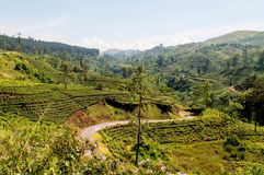 Sri Lanka Teeplantagen-Gebirgsstraße Lizenzfreies Stockbild