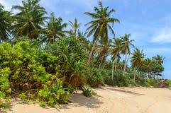 Sri Lanka. Westkust. De kustlijn van stranden. Stock Foto
