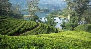 Sri Lanka y x27; estados del té de s fotografía de archivo